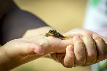 The child holds a small frog in the palm of your hand