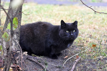 black cat with squinting eyes