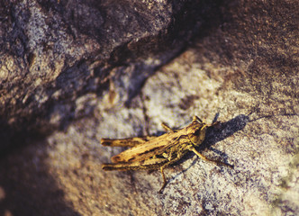 grasshopper sits on a rock