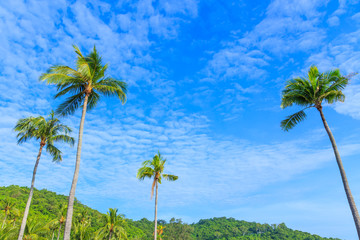 Coconut palm trees against blue sky background