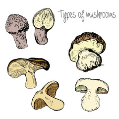 Hand drawn Types of mushrooms