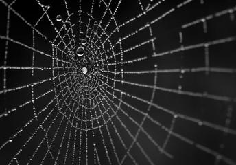Wet spiderweb on a black background