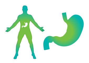 Stomach vector illustration