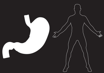 Stomach vector illustration