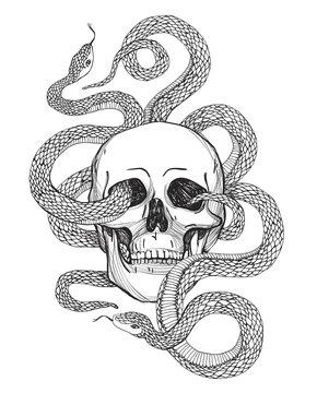 Skull and Snake. Vintage Vector illustration