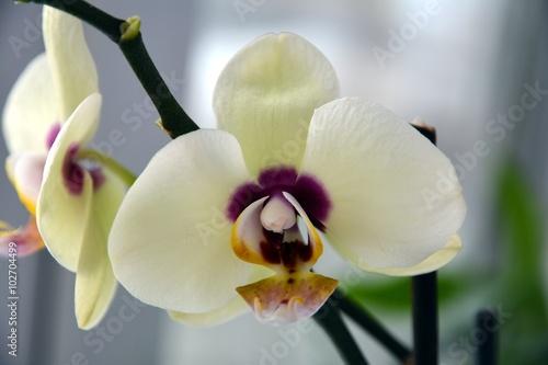 Как распускаются цветы орхидеи