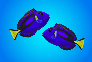 Pacific Blue fish on blue background