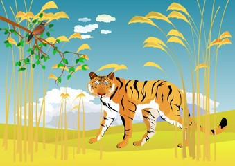 Tiger in reeds stand on ground. Blue sky with clouds on background, tree branch nad bird on foreground