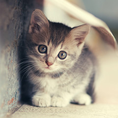 little cute kitten  siting  outdoors