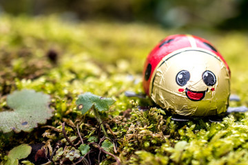 happy chocolate ladybug on green moss as easter decoration, close-up