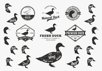 Vector Duck Logo, Icons, Charts and Design Elements