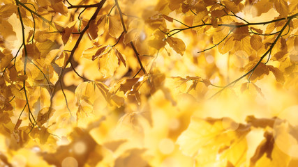 fall leaves and sun rays