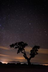 Nice night landscape