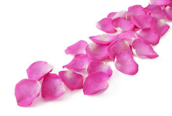 Rose petals abstract composition isolated on white background