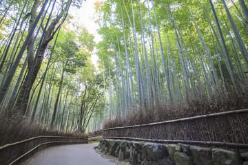 Bamboo Grove panorama in Arashiyama, Kyoto, Japan