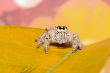 Jumping spider in the garden.