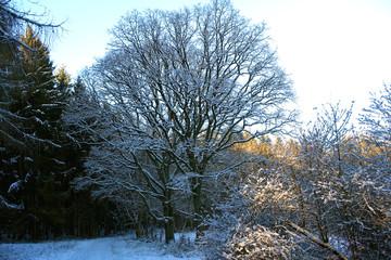 Schneebedeckte Bäume - Winterlandschaft