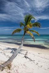 Tropical Beach and Coconut Palm