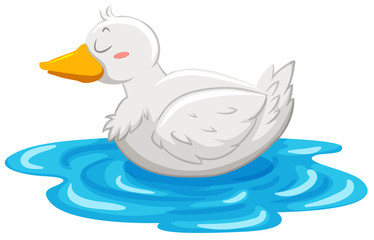 Little duck floating on water