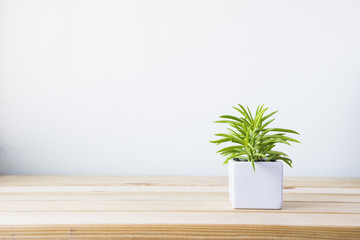 Photo sur Aluminium Vegetal Indoor plant on wooden table and white wall
