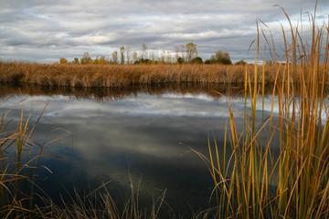Laguna con espadañas en otoño.