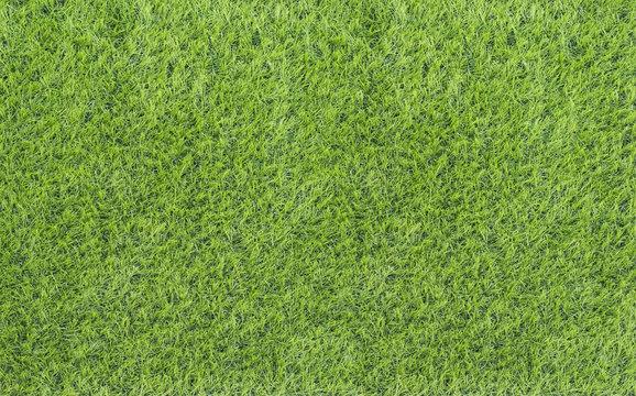 Large Green Grass texture