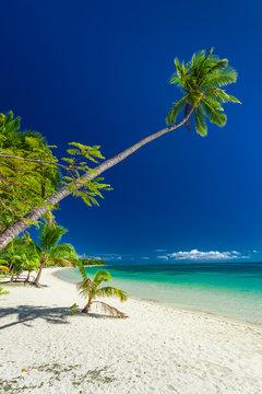 Palm tree hanging over beach on Mamanuca Fiji Islands