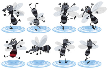 Mosquitos in different actions