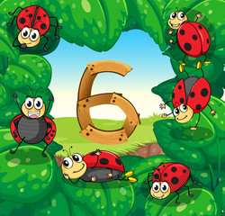 Six ladybugs on leaves with number 6