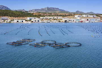 Fish and mussel farm