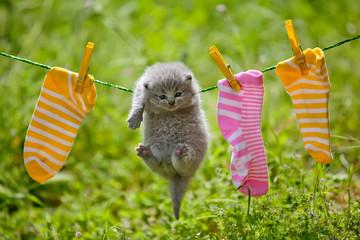 Kitten on nature