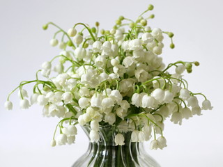 Bouquet of spring flowers Lily of the valley in a vase on a white background.