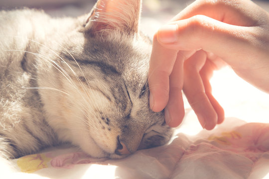 woman hand petting a cat head, love to animals, vintage photo