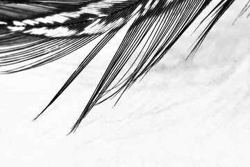 Abstract composition with guinea hen feather