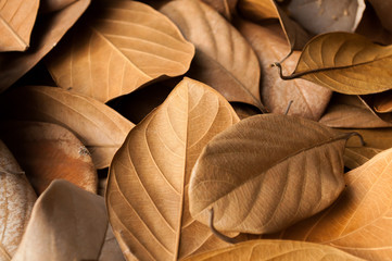 Dried leaves beautiful background