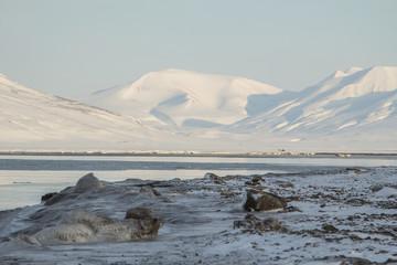 Mountains and icy sea near Longyearbyen, Spitsbergen (Svalbard).