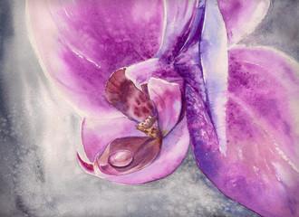Akwarela dyszenie różowy kwiat orchidei z małą kroplą wody.