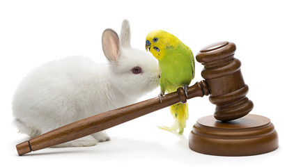 Animal Protection Laws Concept