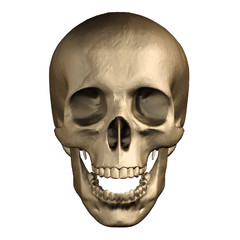 Human skull isolated on white background.
