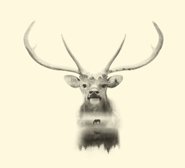 deer head on white background with double exposre effect