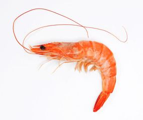 Close up of fresh shrimp isolated on white background.