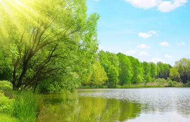 Lush green forest  reflecting in Pond. Sunny day in spring landscape.