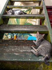 Kittens on stairs
