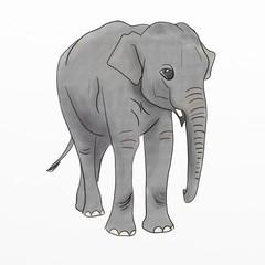 Hand Drawn Baby Elephant