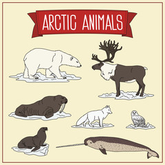 set isolated arctic animals