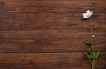 white flower on wooden table. Top view, copy space.