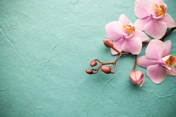 Fototapete - Orchid.