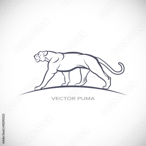vector label with a picture of cougar