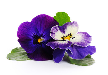 Papiers peints Pansies beautiful violets close up