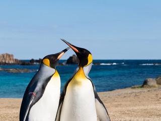 爪木崎海岸を歩くペンギン